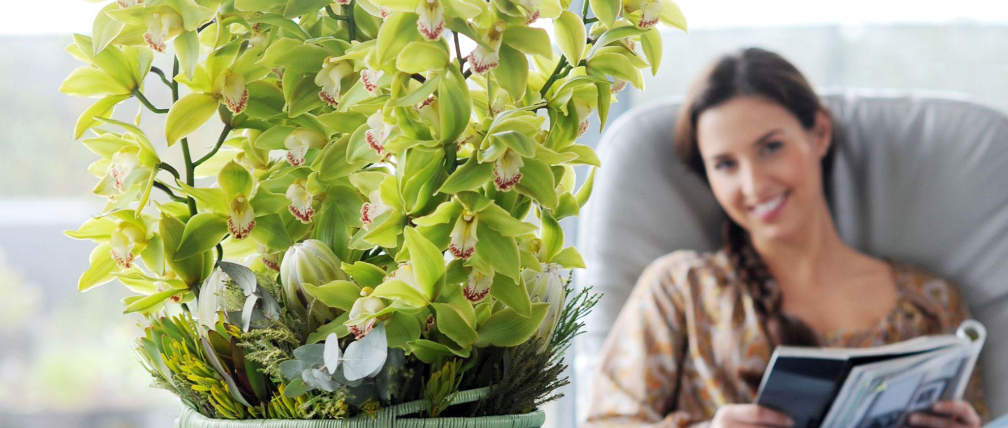 beet und balkonpflanzen da bl h ich auf. Black Bedroom Furniture Sets. Home Design Ideas